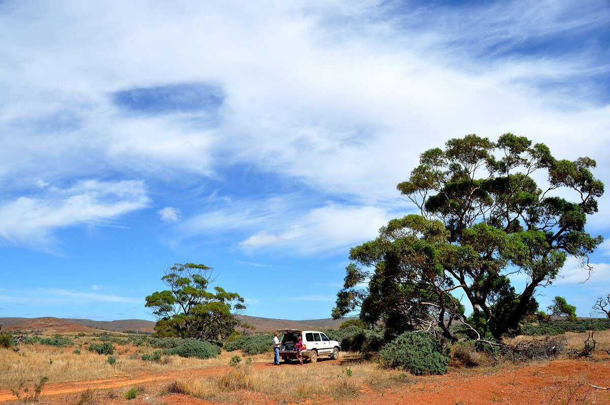 Gawler Ranges National Park in South Australia is plentiful with a who's who of Aussie wildlife.