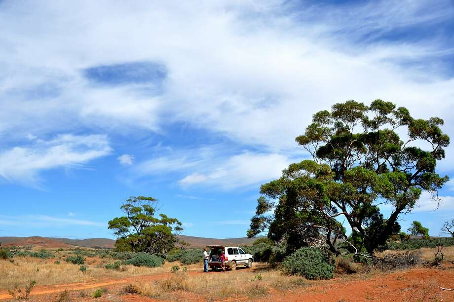 Gawler Ranges National Park, part of the northern side of the Eyre Peninsula's triangle, abounds with a who's who of Aussie wildlife. Photo:  Jim Hutchison, Special To The Chronicle
