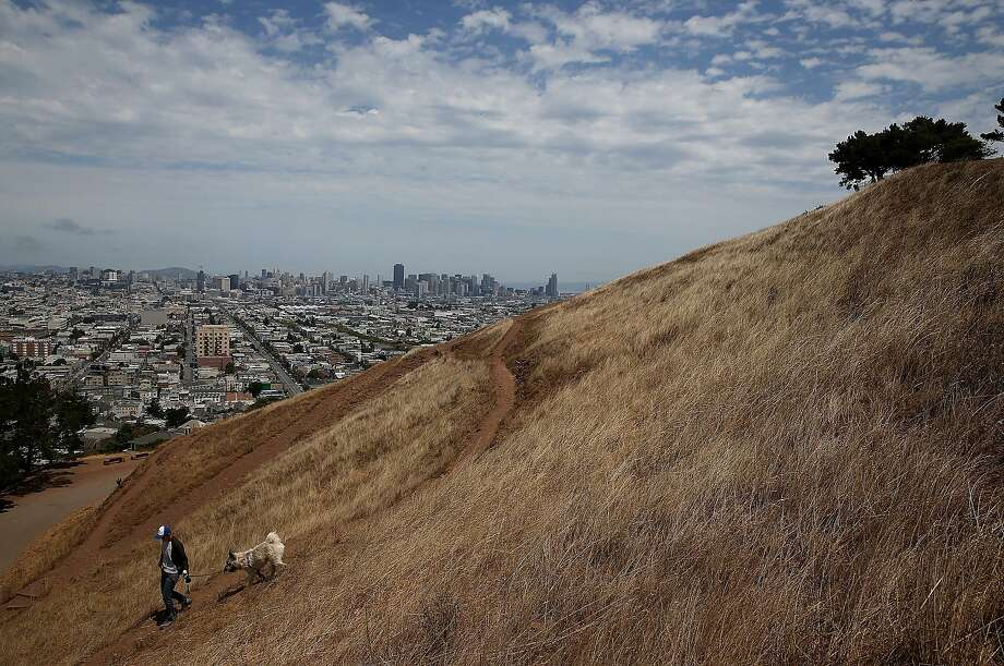 SAN FRANCISCO, CA - JULY 16:  A woman walks her dog walker on a dried section of Bernal Heights Park on July 16, 2014 in San Francisco, California. As the severe drought in California contiues to worsen, the State's landscape and many resident's lawns are turning brown due to lack of rain and the discontinuation of watering.  (Photo by Justin Sullivan/Getty Images) *** BESTPIX *** Photo: Justin Sullivan, Getty Images