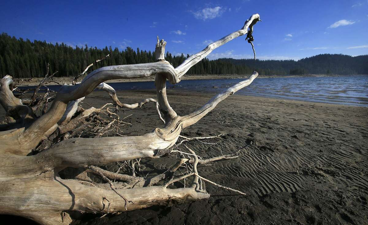 Sun-bleached limbs from a fallen tree on the shoreline at Huntington Lake, where water levels are lower than many in the tiny High Sierra community in Fresno County, Calif., can remember. The Sierra snowpack was at 32 percent of its average annual depth this winter, and now the state's largest reservoirs are less than half-full. (Mark Boster/Los Angeles Times/MCT)