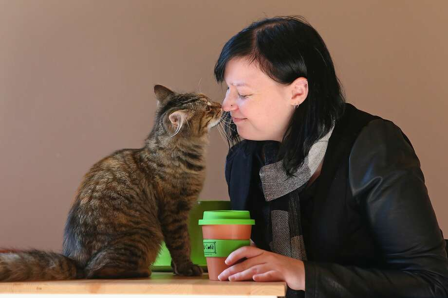 Coffee, tea or me ... ow? At the Cat Cafe Melbourne in Melbourne, Australia, customers can get a lick with their latte. The coffee shop has several cats from rescue shelters living on the premises. Photo: Scott Barbour, Getty Images