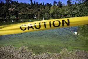 Autistic man drowns in Lake Temescal in Oakland - Photo