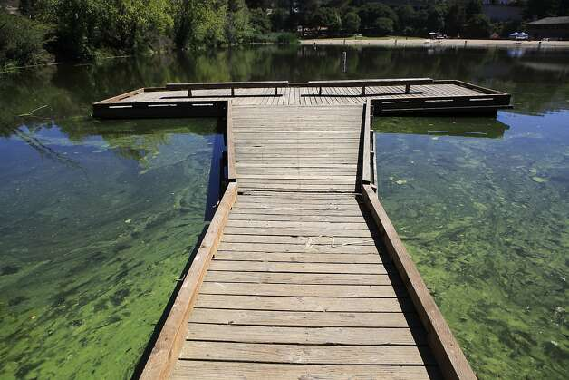 Toxic algae close lake temescal to swimmers sfgate for Lake temescal fishing