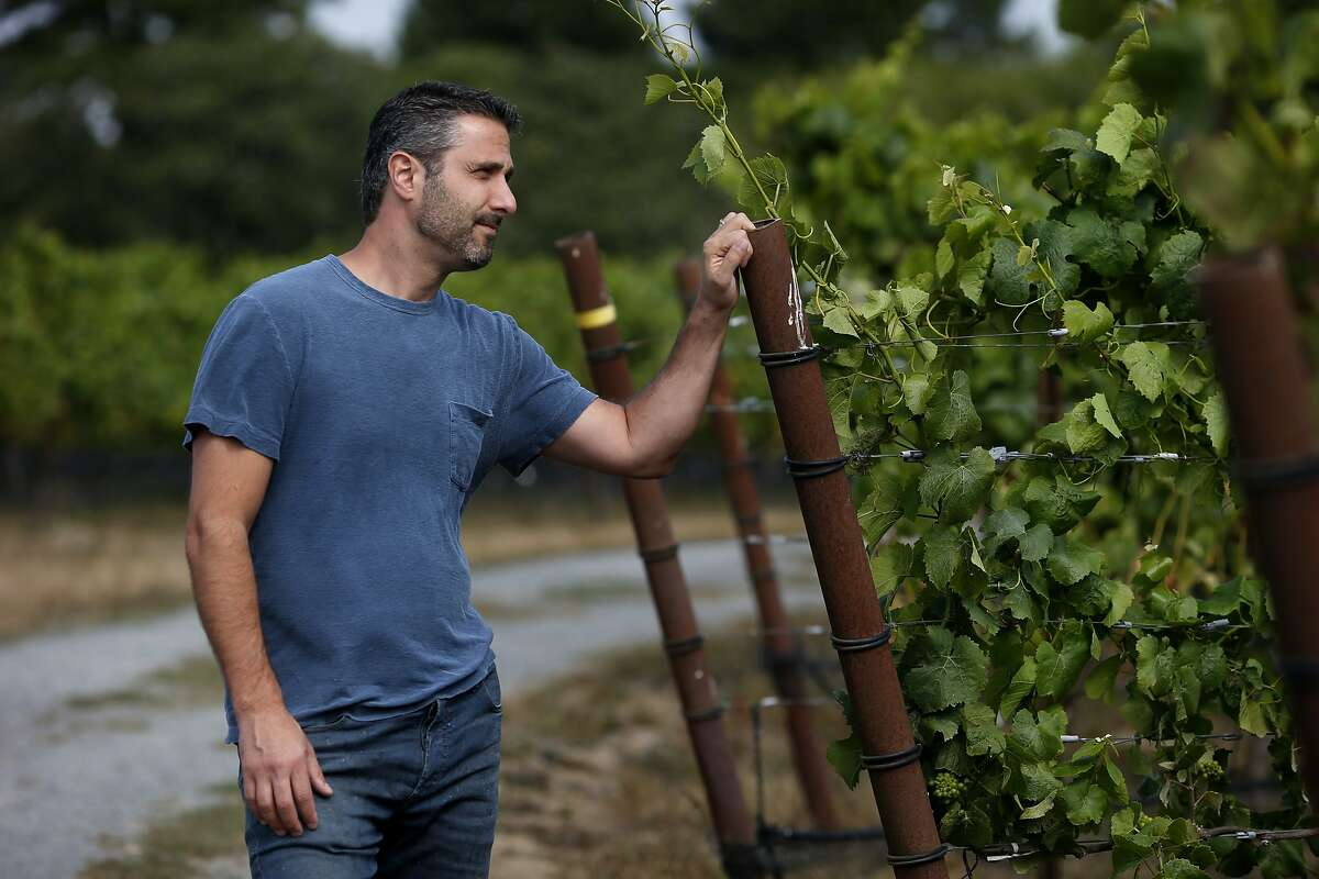 Jamie Kutch pauses in the Falstaff vineyard where he uses the Pinot Noir grapes to fashion his own wine Thursday July 17, 2014. Winemaker Jamie Kutch is fond of the coastal Pinot Noir grapes in Sonoma County he uses for his wines. He visits the Falstaff vineyard near Sebastopol, Calif. to check on the grape growth.