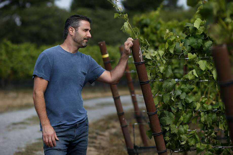 Jamie Kutch pauses in the Falstaff vineyard near Sebastopol, where he harvests Pinot Noir grapes and now uses the stems in fermentation with good results. Photo: Brant Ward, San Francisco Chronicle