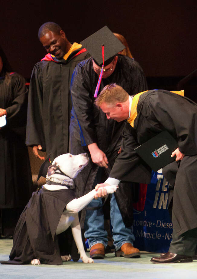 Kolby Thompson's specially trained psychiatric service dog Thor, left, shakes hands with Universal Technical Institute Campus President, Darrin Brust, right, during a UTI graduation ceremony at Fallbrook Church, Friday, July 25, 2014, in Houston. Kolby is an Iraq, Afghanistan, Korea, Kuwait, Fort Bragg and Fort Bliss veteran who now lives with PTSD. Thor helps mitigate his stress. Photo: Cody Duty, Houston Chronicle / © 2014 Houston Chronicle
