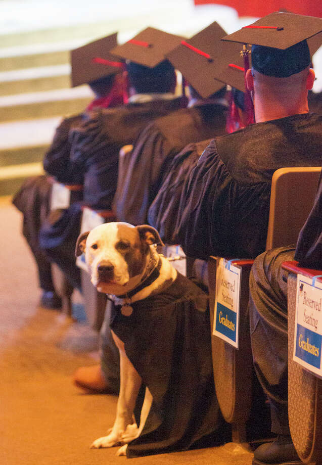 Kolby Thompson, right, and his specially trained psychiatric service dog, Thor, left, sit during a graduation ceremony at Fallbrook Church, Friday, July 25, 2014, in Houston. Kolby is an Iraq, Afghanistan, Korea, Kuwait, Fort Bragg and Fort Bliss veteran who now lives with PTSD. Thor helps mitigate his stress. Photo: Cody Duty, Houston Chronicle / © 2014 Houston Chronicle