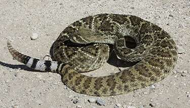 Though they strike fear in humans, slithering reptiles need