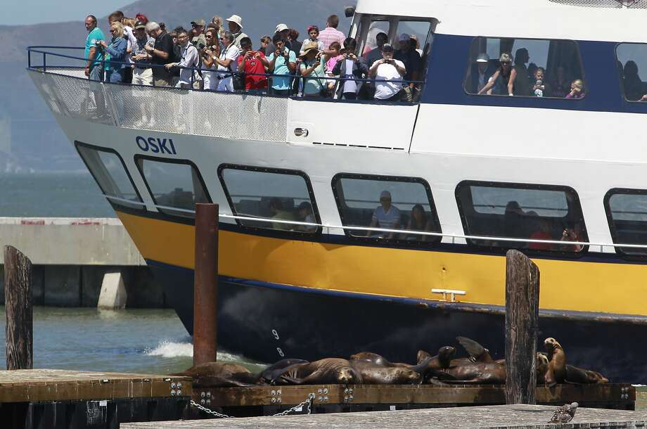A boatload of tourists checks out a few of the sea lions that were left behind when the rest of them bailed out of Pier 39 in July, leaving these on the docks t0 bask in the sun. Photo: Paul Chinn, The Chronicle