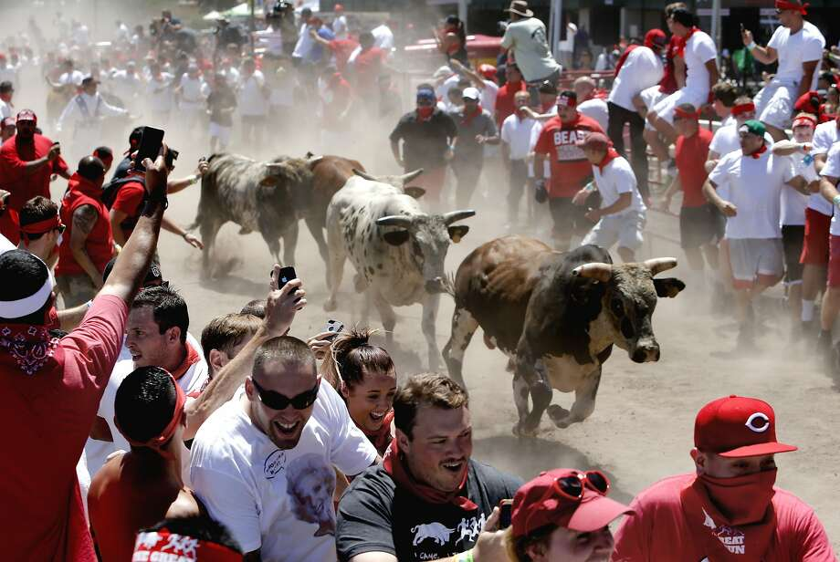 Runners scramble away from 2,000-pound bovines during the Great Bull Run at the Alameda County Fairgrounds. Photo: Michael Macor, The Chronicle
