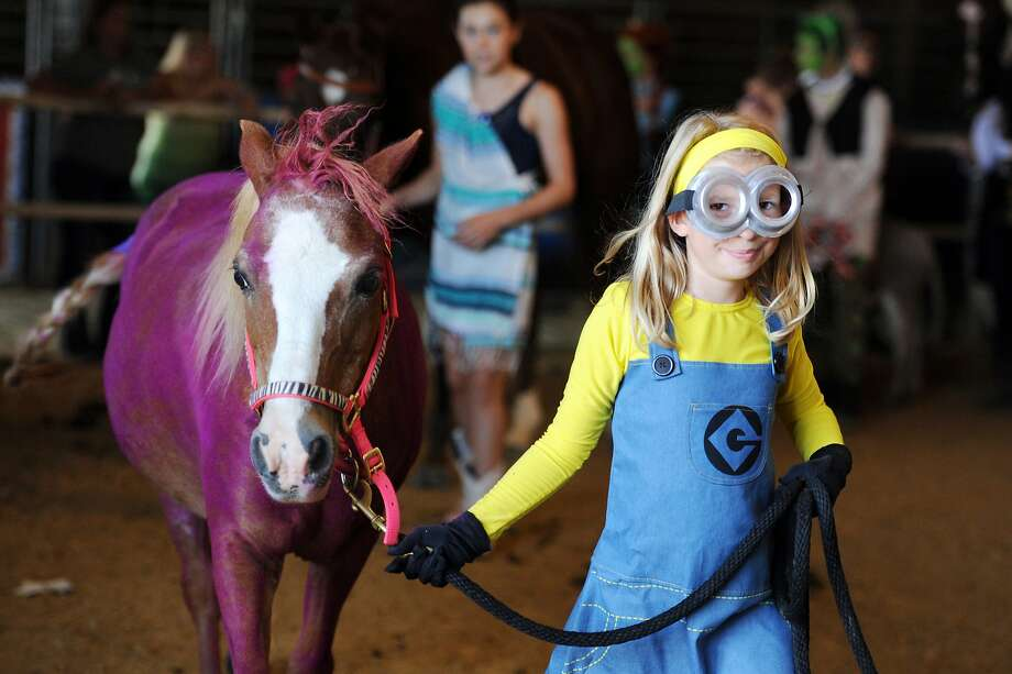 "Kaylie Bonenberger, 9, dressed as a yellow minion leads her horse, Scooter, dressed as a purple minion around the ring to be judged in the 4-H Horse & Pony Club Costume Contest at the Vanderburgh  County Fair in Evansville, Ind., on Saturday, July 26, 2014. Kaylie's costume was inspired by the movie ""Despicable Me 2"" and won her the Reserve Grand Champion in the contest. (AP Photo/The Evansville Courier & Press, Erin McCracken) Photo: Erin McCracken, Associated Press"