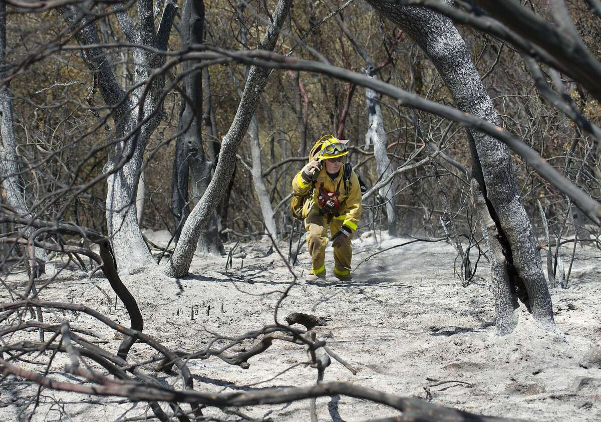 A City of Folsom firefighter moves through burned trees and ash not far from the origin of the Sand Fire near the Cosumnes River in Amador County on Sunday, July 27, 2014 in Plymouth, Calif. The fire that forced more than 1,200 residents to evacuate their homes in El Dorado and Amador counties has destroyed 10 homes and seven outbuildings, according to Cal Fire. The 3,800-acre blaze is 35 percent contained this morning from 20 percent on Saturday.