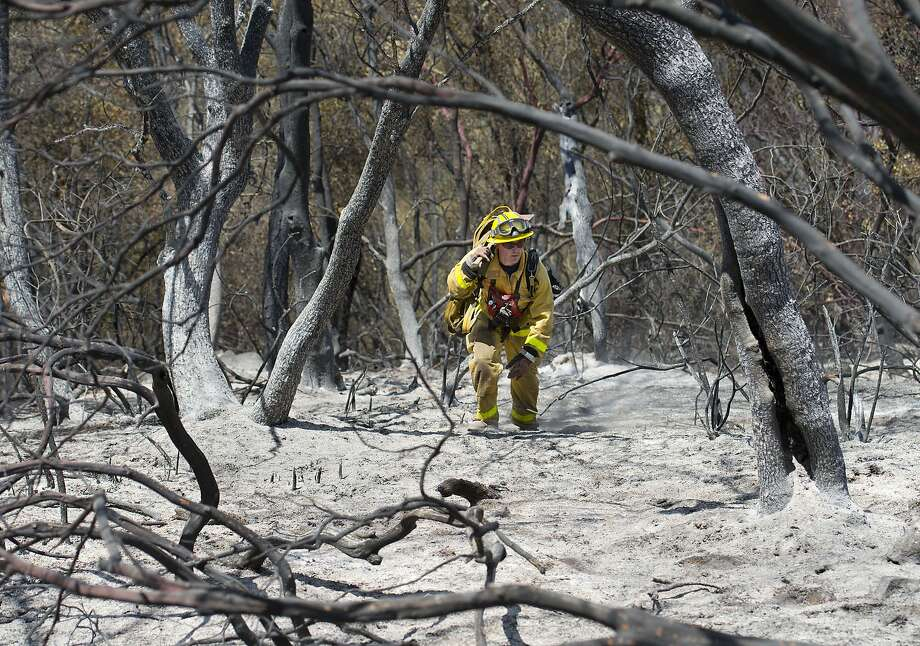 A City of Folsom firefighter moves through burned trees and ash not far from the origin of the Sand Fire near the Cosumnes River in Amador County on Sunday, July 27, 2014 in Plymouth, Calif. 