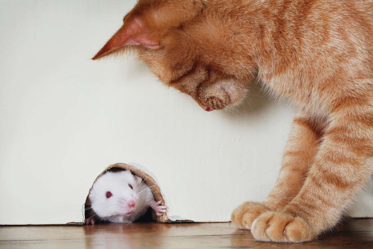 Mouse catcher (OK, that one's a given)