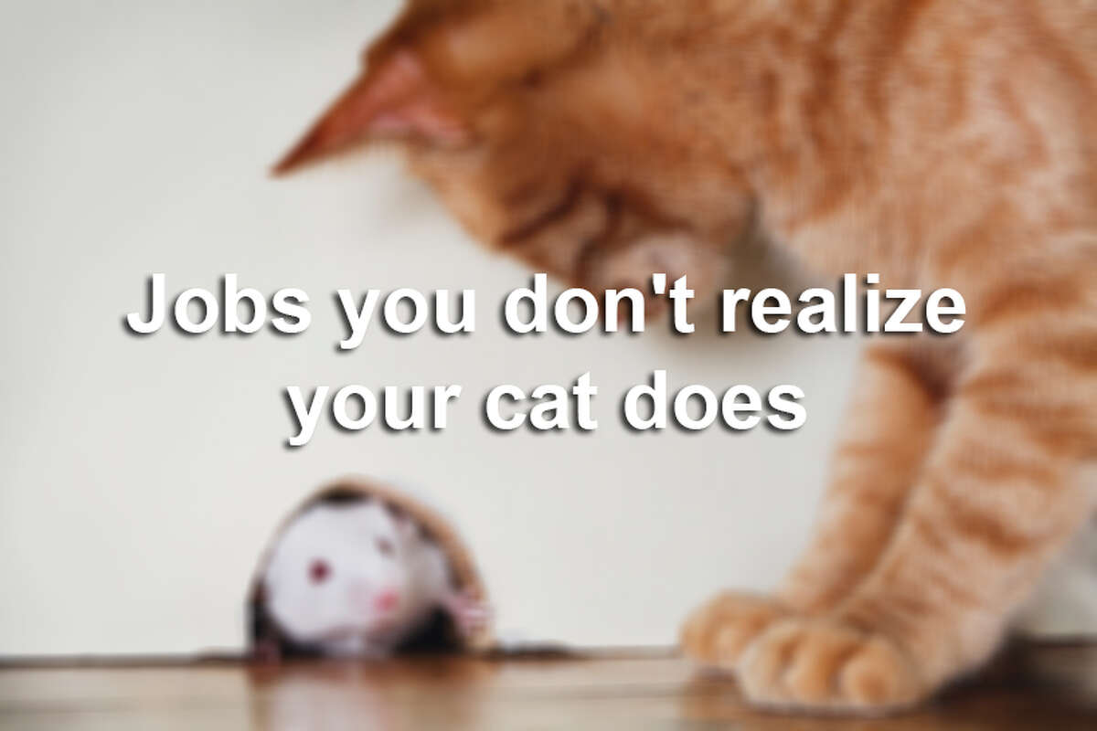 Your cat does more than sit around all day while you're at work (and at home). But you may not even notice the subtle ways he's contributing to the household. Here are some of the jobs your cat is doing without you even realizing it.