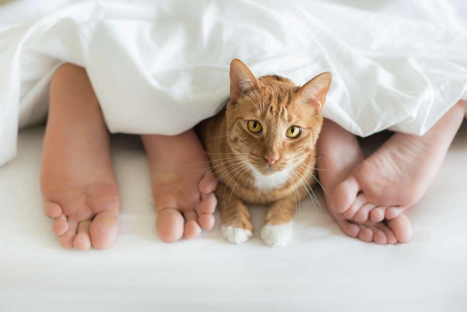 Foot warmer Photo: Gary S Chapman, Getty Images / (c) Gary S Chapman