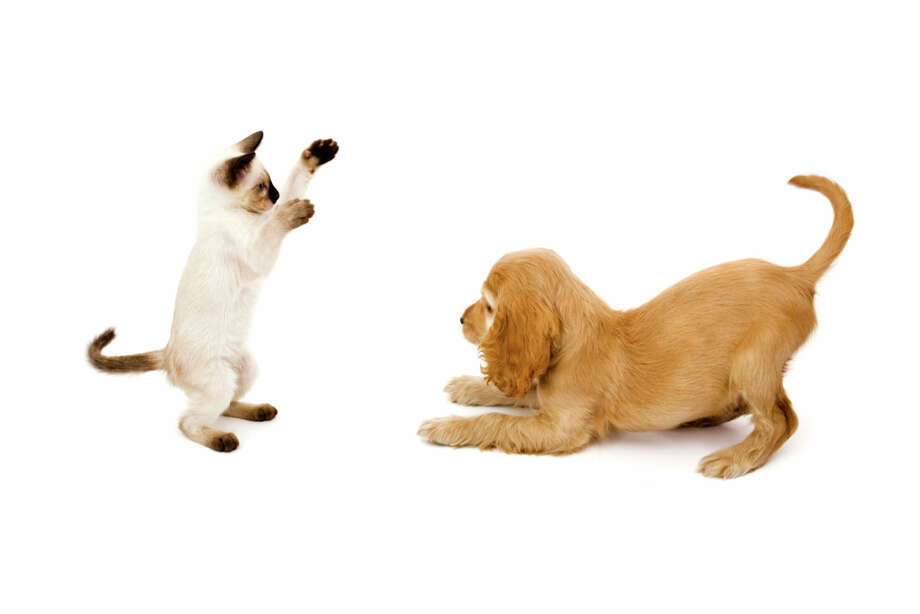 Dog trainer Photo: 101cats, Getty Images / (c) 101cats