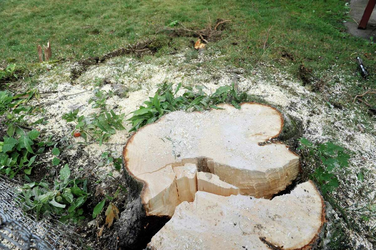 A view of the stump of of a large tree Monday, July 28, 2014, which cracked and lifted the roots up out of the ground Sunday as the tree fell on the home of Rachel Lewis and her boyfriend, Richard Naze in Watervliet, N.Y. The tree came down on their home Sunday afternoon when a strong storm came through the area. (Paul Buckowski / Times Union)