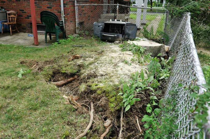 A view of the stump of of a large tree Monday, July 28, 2014, which cracked and lifted the roots up