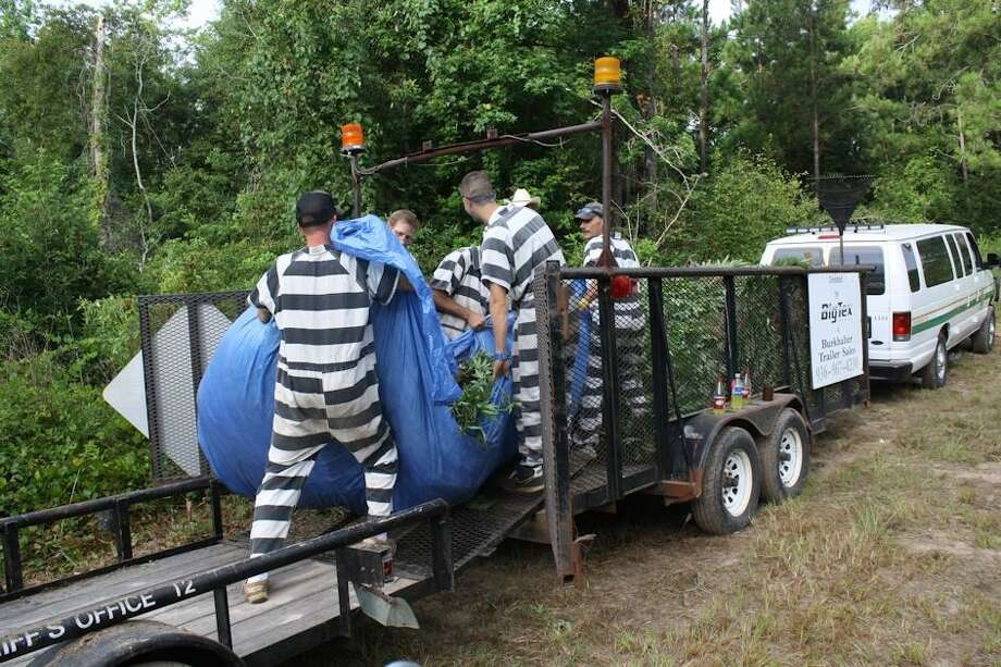 July 28, 2014:A deer hunter stumbled upon a massive marijuana growing operation in Polk County, where authorities uncovered 100,197 plants among 29 fields with an estimated value of $175 million. Photo: Montgomery County Police Reporter