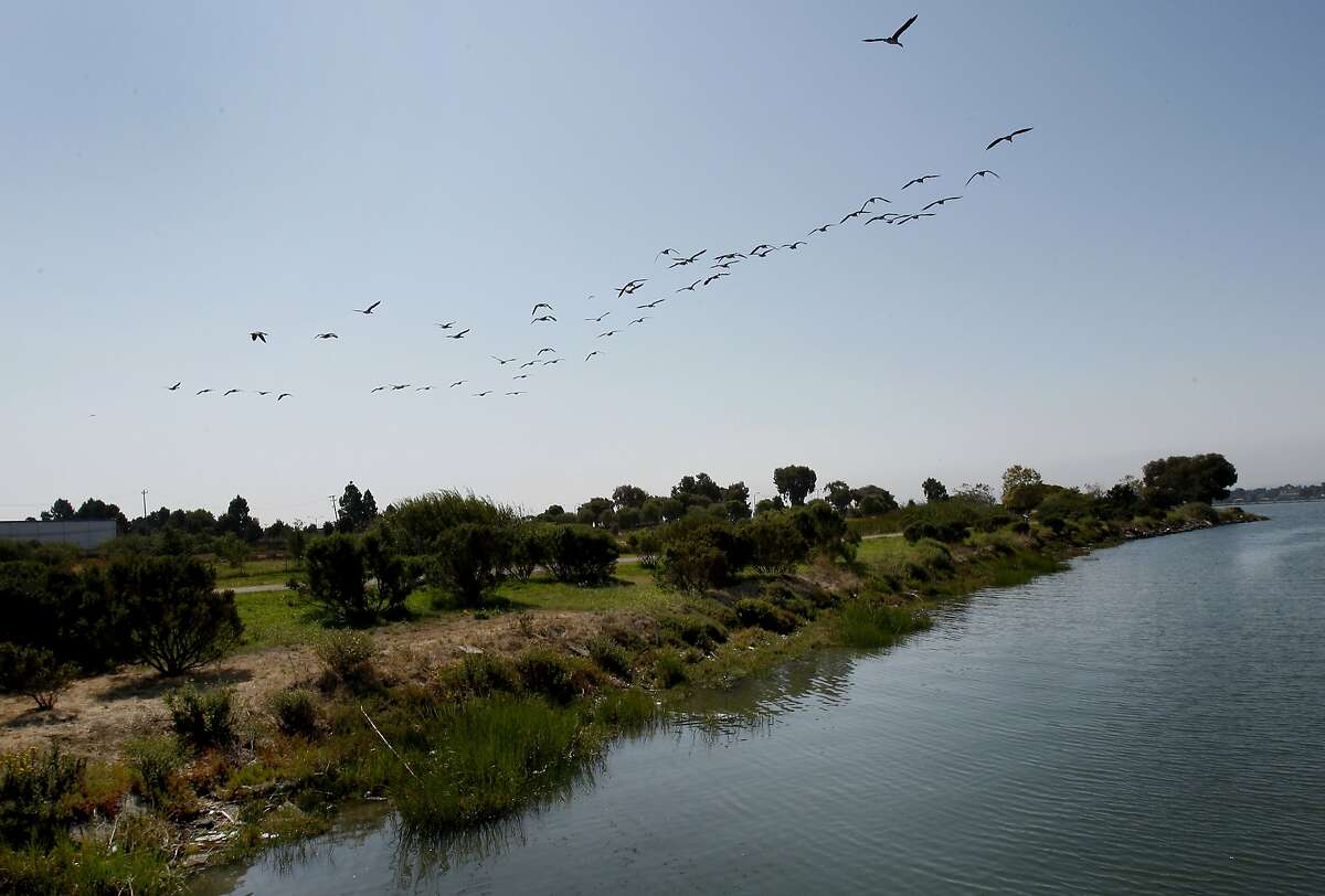 A flock of geese flies over the Damon Slough and its south shore full of litter Tuesday September 13, 2011. Save the Bay issues its list of top trashiest spots in and around the San Francisco Bay which include Damon Slough in Oakland, Calif. and Mission Creek in San Francisco, Calif.