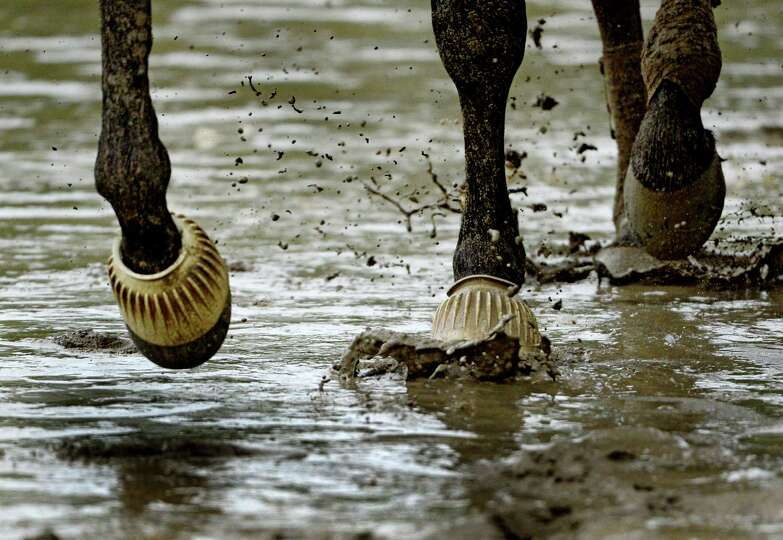 A horse moves across the muddy main track during the exercise period after heavy rains hit the area