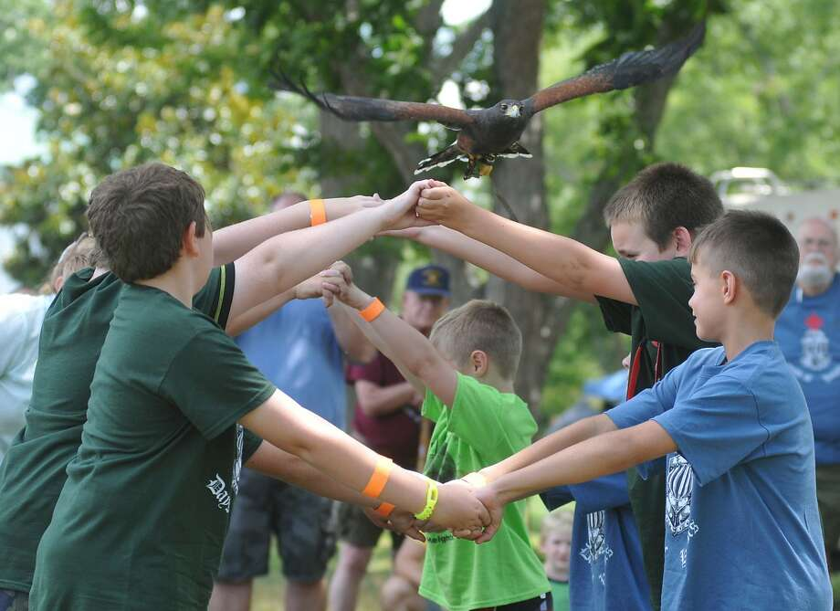 How you earn the Weird Animal Tricks merit badge:At Crater Region Boy Scouts Day Camp in Prince George County, Va., Scouts form a tunnel with their arms for a Harris's Hawk to fly through it. It's not clear if the raptor obliged or merely flew over them. Photo: Patrick Kane, Associated Press