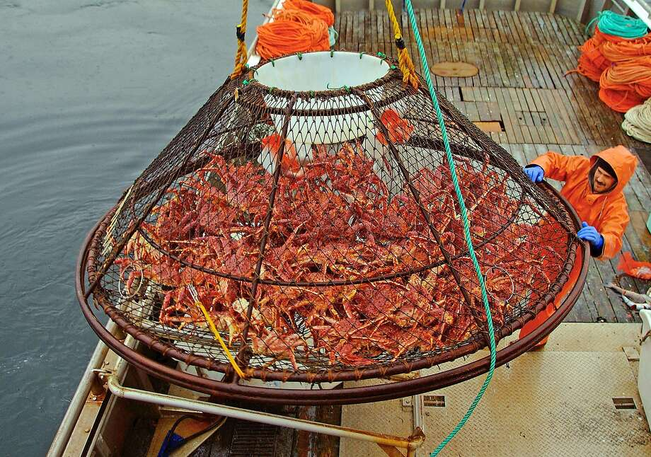 FILE - In this Nov. 6, 2005 file photo, Ralph Strickland guides a crab pot full of red king crabs onto the deck of F/V Frigidland during the current fishery in the waters off of Juneau, Alaska. The release of carbon dioxide into the air from factory smokestacks to the tailpipe on your car could pose a risk to red king crab and other lucrative fisheries in Alaska, a new report says. The research, led by the National Oceanic and Atmospheric Administration, was to be published Tuesday, July 29, 2014,  in the online journal Progress in Oceanography. (AP Photo/Klas Stolpe, File) Photo: Klas Stolpe, Associated Press
