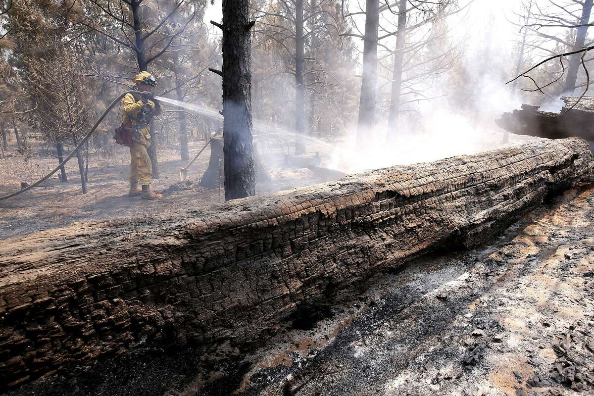 Jake Chesnut with the Mariposa County fire department puts out hot spots as firefighters continue to battle the El Portal fire just west of Yosemite National Park on Tuesday July 29, 2014, in Foresta, Calif.