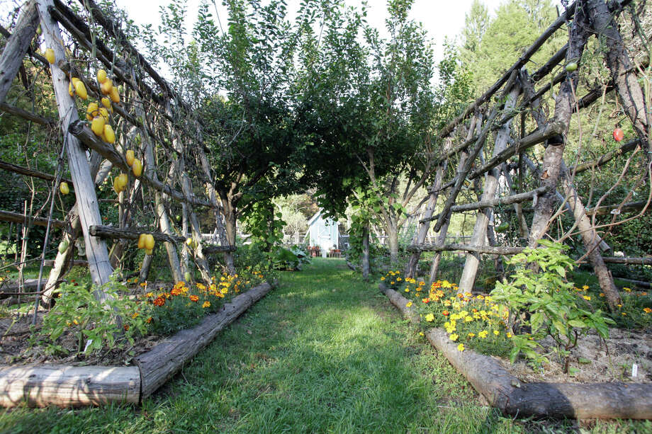 Heirloom vegetables grow in Pamela Page's Bethel garden on trellises. Photo: Contributed Photo / Connecticut Post Contributed