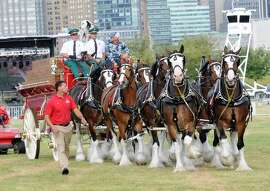 JERSEY CITY, NJ - JULY 04:  The world famous Budweiser Clydesdales (celebrating their 81st anniversary with Anheuser-Busch) appear at the Freedom & Fireworks Festival in Liberty State Park on July 4, 2014, where Budweiser also presented a $3 million donation to the Folds of Honor Foundation to benefit families of military killed or disabled in action.  (Photo by Noam Galai/Getty Images for Budweiser)