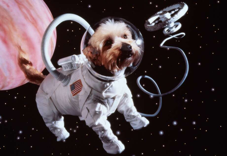 """Dead pet spaceflightsHas your dog ever barked, and the bark sounded a lot like he was saying """"I really would like to go to outer space?"""" Have you noticed your cat attempting to defy gravity on a regular basis? Now, you can memorialize your pet after death by making their astronaut dreams come true.Celestis Inc., a Houston firm that has been sending human remains to space for years, will now begin sending pet remains, too, the Associated Press reports. The spaceflights start at about $995. Photo: Getty Creative Stock"""