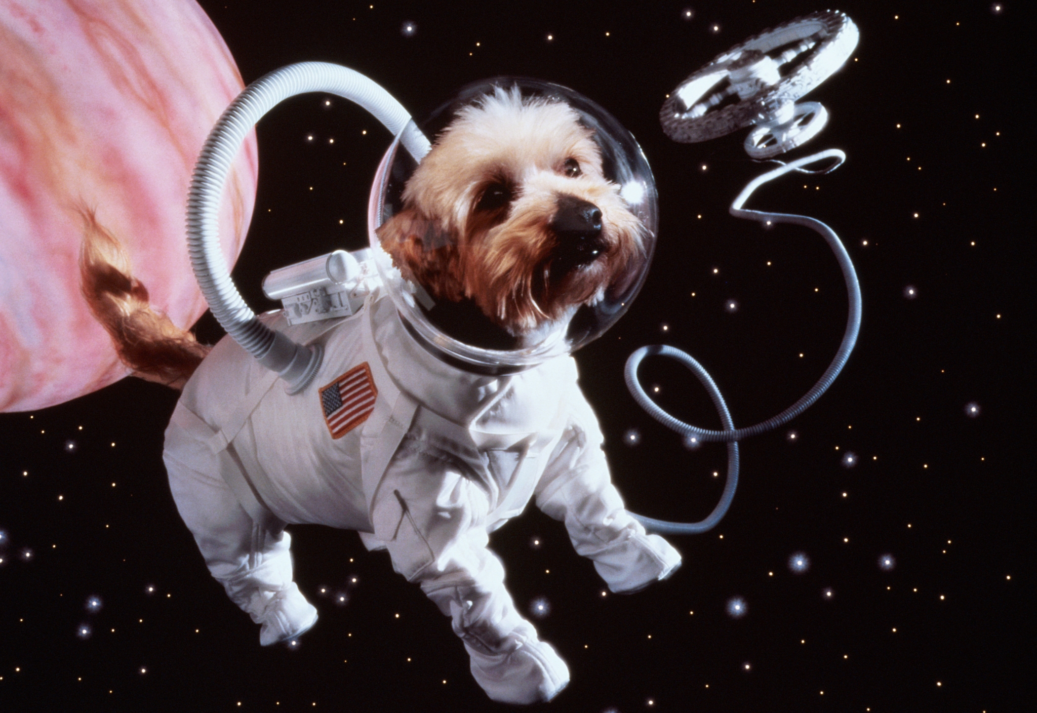 animals in space nasa - HD 1500×1000