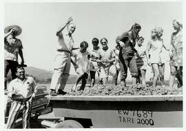 08SEP69-FD-HO CELEBRATION OF TE GRAPE HARVEST PHOTO COURTESY OF ROBERT MONDAVI