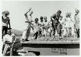 08SEP69-FD-HO CELEBRATION OF TE GRAPE HARVEST PHOTO COURTESY OF ROBERT MONDAVI