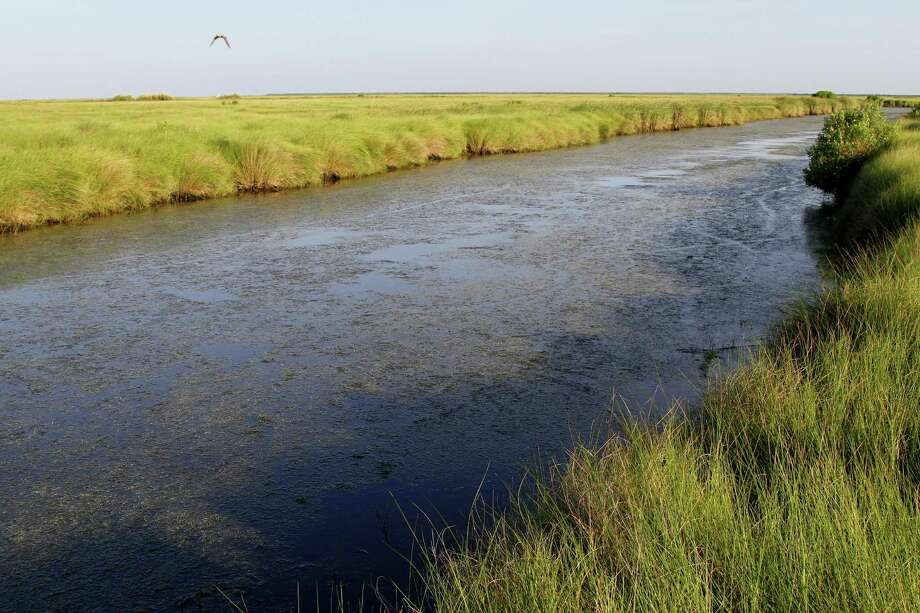 A bumper crop of widgeongrass, a favorite duck food, packs a freshwater pond on the 1,350-acre Cade Ranch tract on Bolivar Peninsula. The tract recently was deeded to Anahuac National Wildlife Refuge. Photo: Picasa