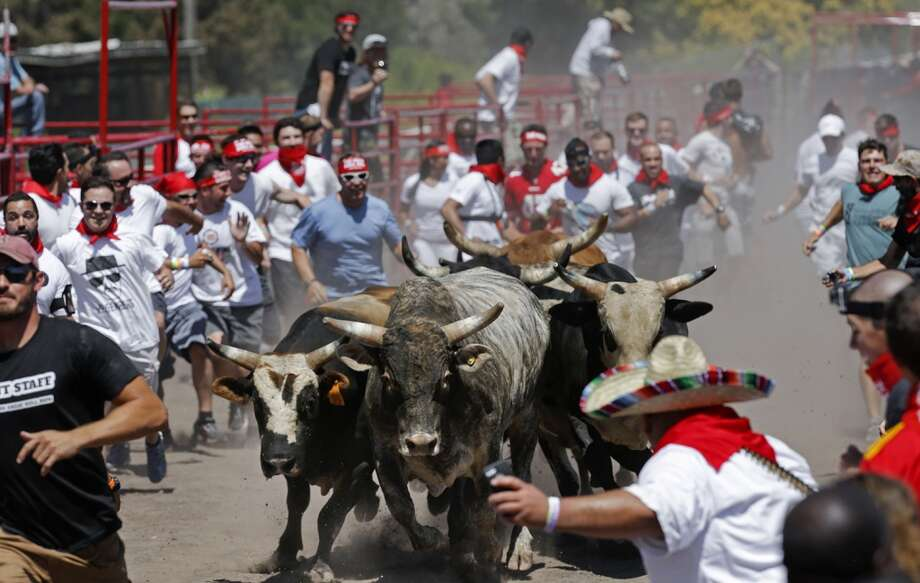 A mad scramble as the bulls and runners take off during The Great Bull Run on Saturday July 26, 2014, at the Alameda County Fairgrounds in Pleasanton, Calif. Photo: Michael Macor, The Chronicle