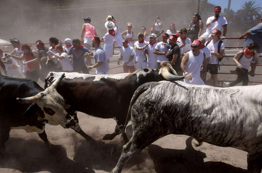 Bulls scramble past the runners during The Great Bull Run on Saturday July 26, 2014, at the Alameda County Fairgrounds in Pleasanton, Calif. Photo: Michael Macor, The Chronicle