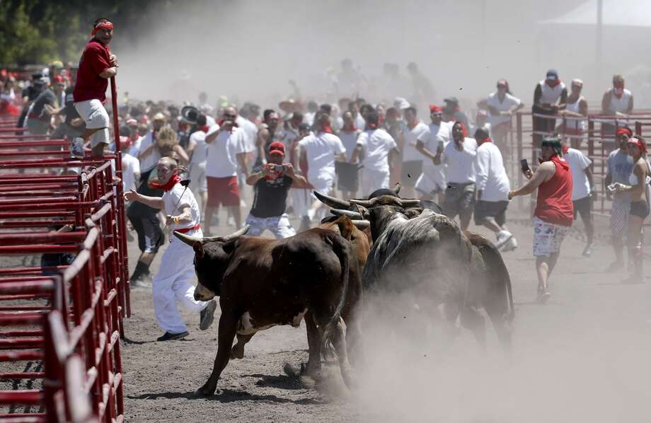 The bulls are off and running during the final run of The Great Bull Run on Saturday July 26, 2014, at the Alameda County Fairgrounds in Pleasanton, Calif. Photo: Michael Macor, The Chronicle