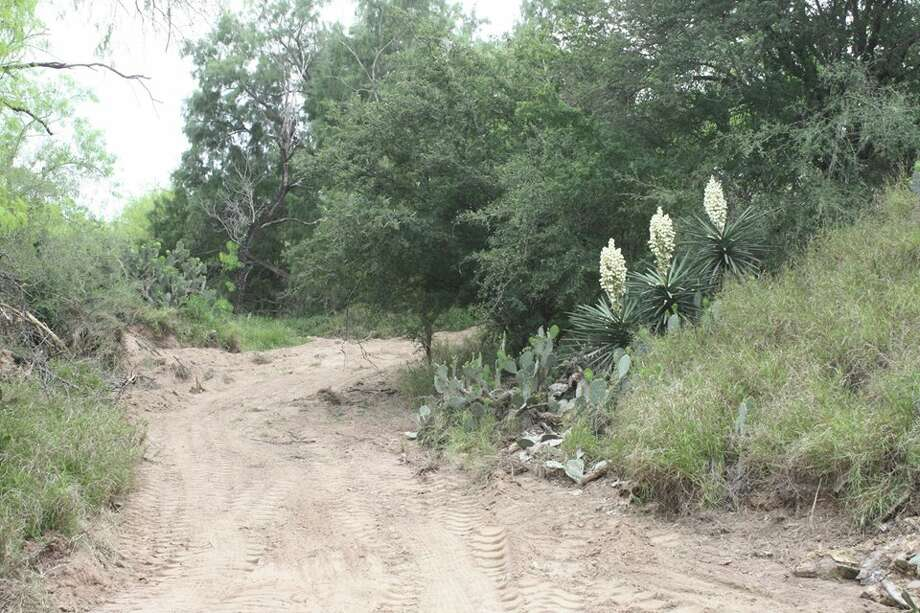 The all-natural Fordyce Nature and Running Trails in Rio Grande City house a bike trail, measuring 3.5 miles, and two walking trails, measuring 2.5 and 1.25 miles. The trails were once heavily used by human traffickers and drug smugglers. Photo: Courtesy/Rio Grande City
