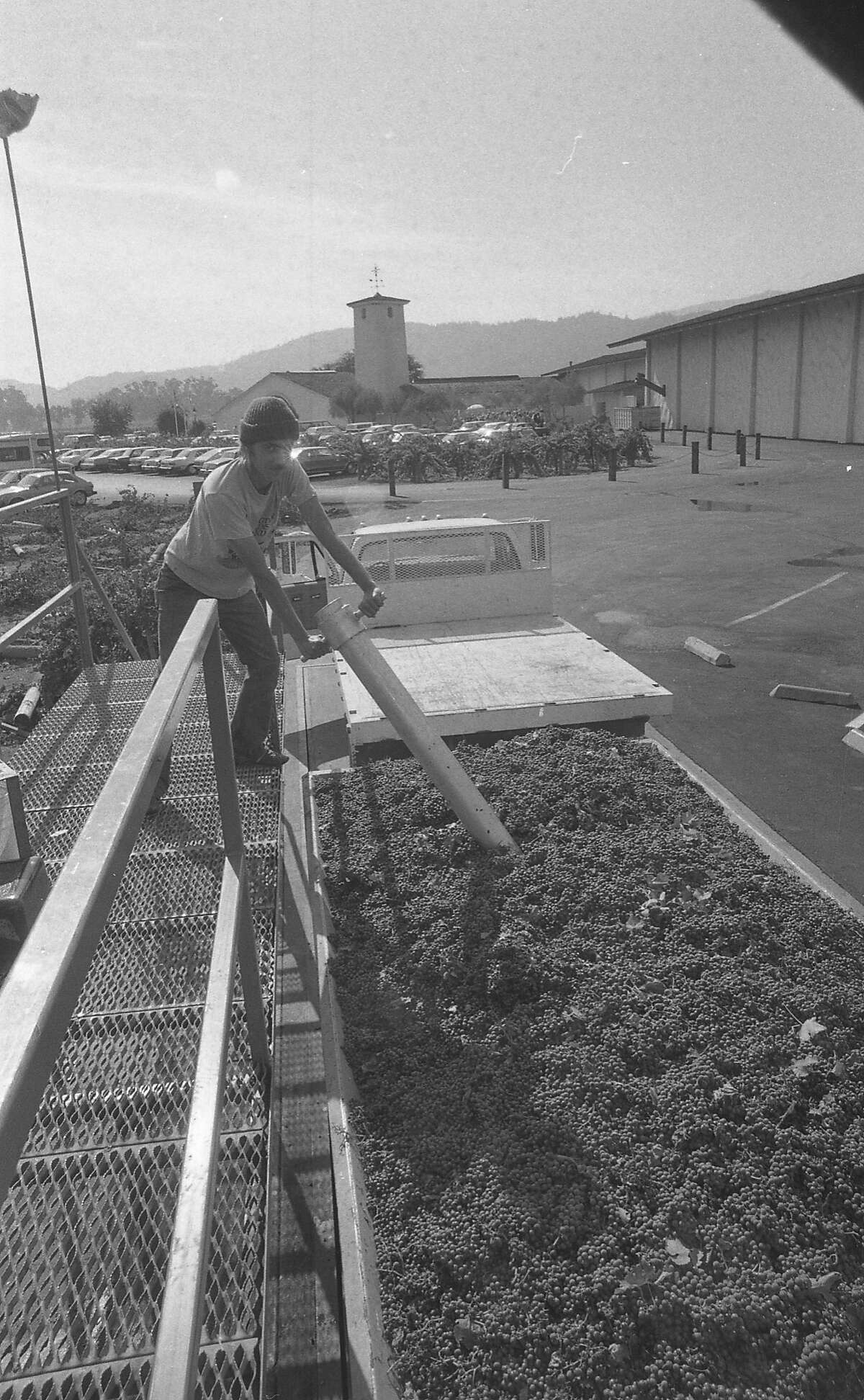 Grape Harvest, Mondavi Winery, Rutherford, Napa County Filed April 18, 1981