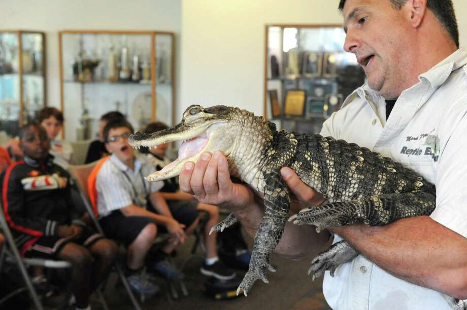 Reptile expert Mark Perpetua holds an alligator during a presentation to children in the ACPHS Summer Science Camp at Albany College of Pharmacy Thursday, July 31, 2014, in Albany, N.Y. (Michael P. Farrell/Times Union) Photo: Michael P. Farrell / 00027992A