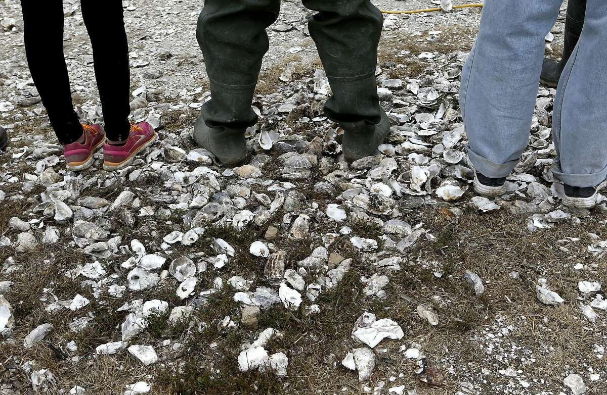 The shoreline is scattered with old oyster shells at the Drakes Bay Oyster Company on Thursday July 31, 2014, in Inverness, Calif. The final day that the public can purchase oysters from the Drake's Bay Oyster Company as their lease expires with the National Park Service and the area reverts to a marine sanctuary.