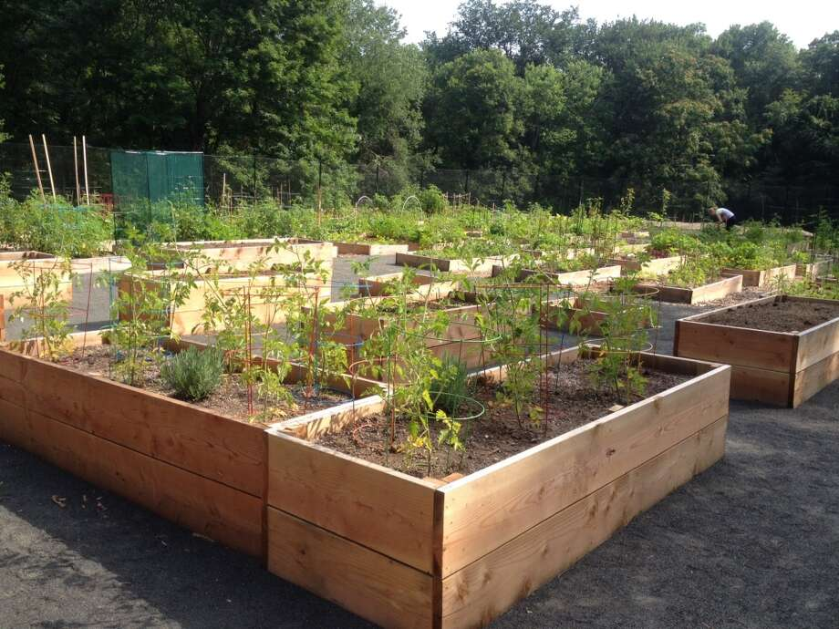 "Raised or ""enabling garden"" plots allow gardeners with disabilities to garden more easily."