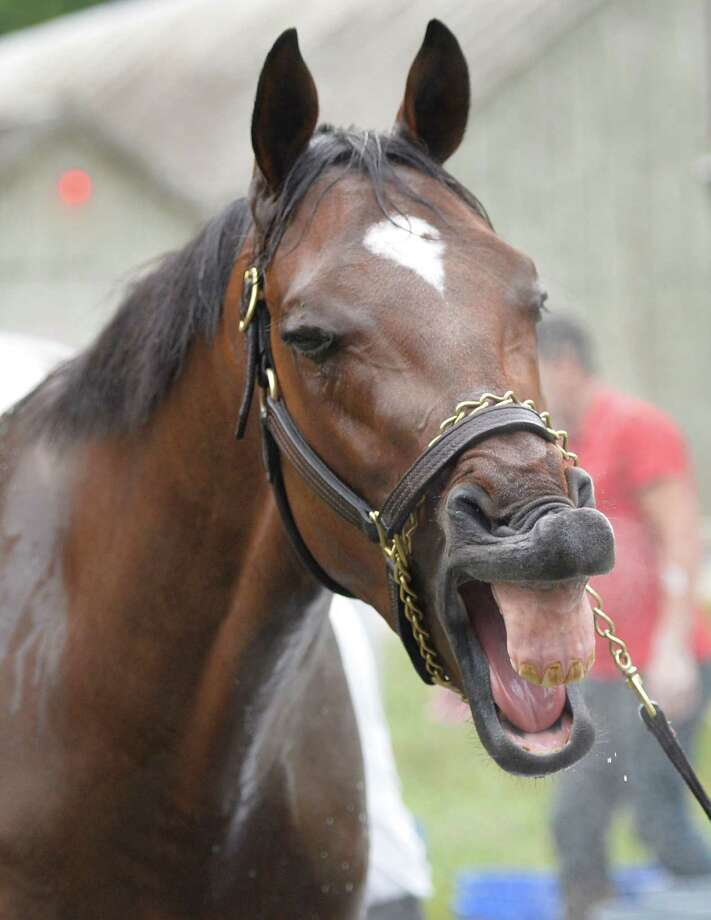 Whitney entrant Moreno yawns at the competition early Wednesday morning July 30, 2014 in Saratoga Springs, N.Y.    (Skip Dickstein photos Photo: SKIP DICKSTEIN