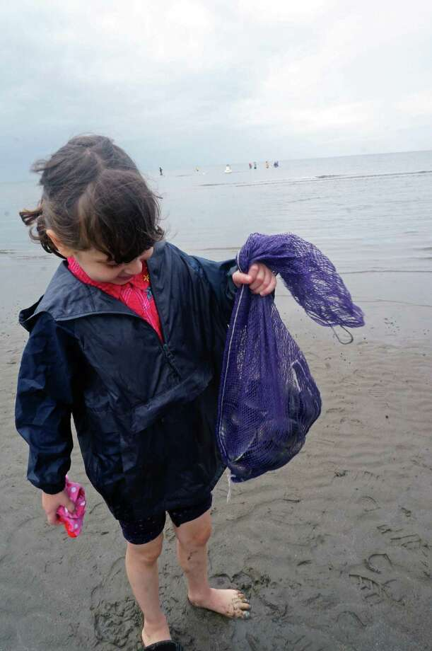 Naomi Rosen, 8, shows off the bag of clams she and her father harvested Saturday at the Shellfish Commission's clam clinic at Sasco Beach. Photo: Genevieve Reilly / Fairfield Citizen