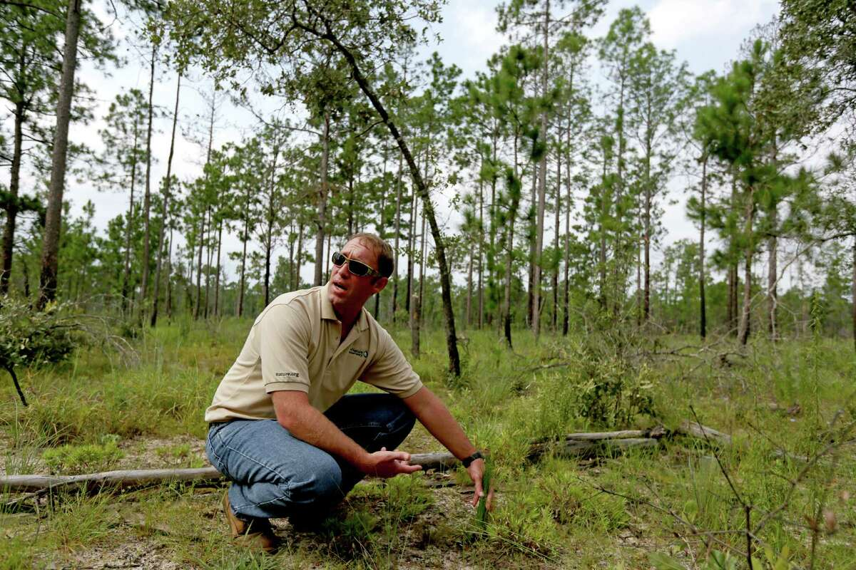 Shawn Benedict, Southeast Texas Preserve manager, said fires work to rejuvenate forests and remove debris that could keep seeds from reaching the forest floor.