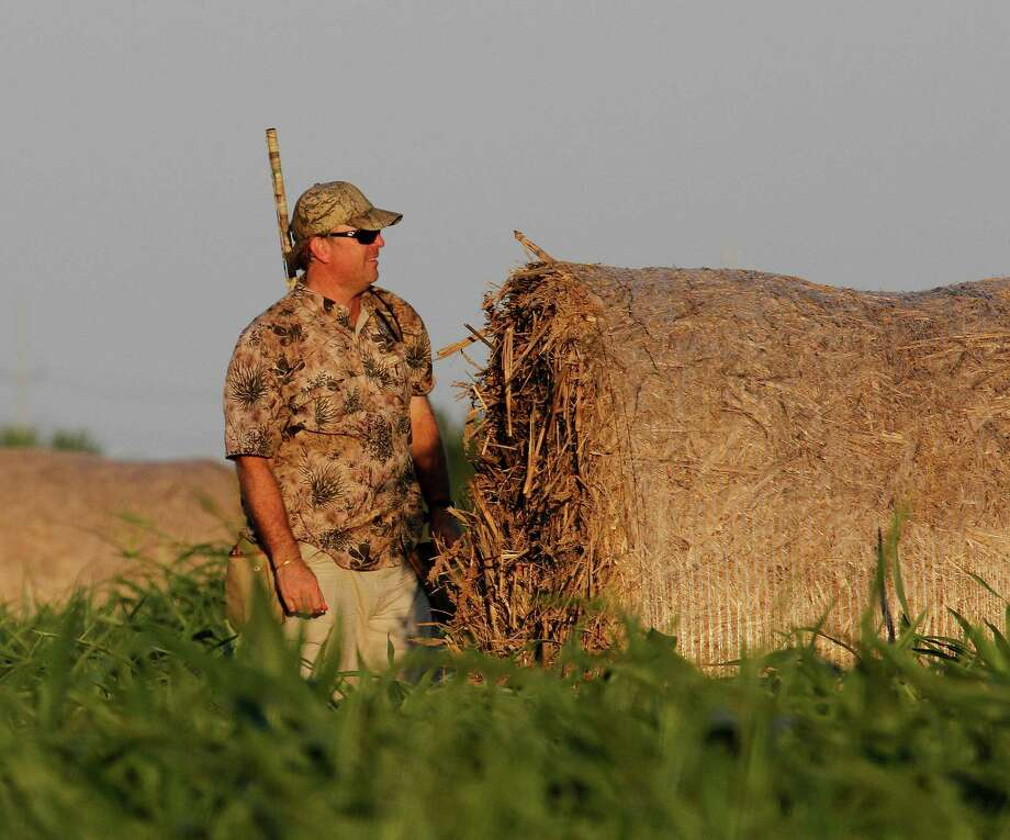 Results of a national survey of dove hunters indicate most are older, better- educated and better off financially than the average American and have strong opinions about swapping the lead pellets in their traditional dove loads for shotshells carrying non-lead pellets. Photo: Picasa