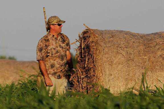 Results of a national survey of dove hunters indicate most are older, better- educated and better off financially than the average American and have strong opinions about swapping the lead pellets in their traditional dove loads for shotshells carrying non-lead pellets.