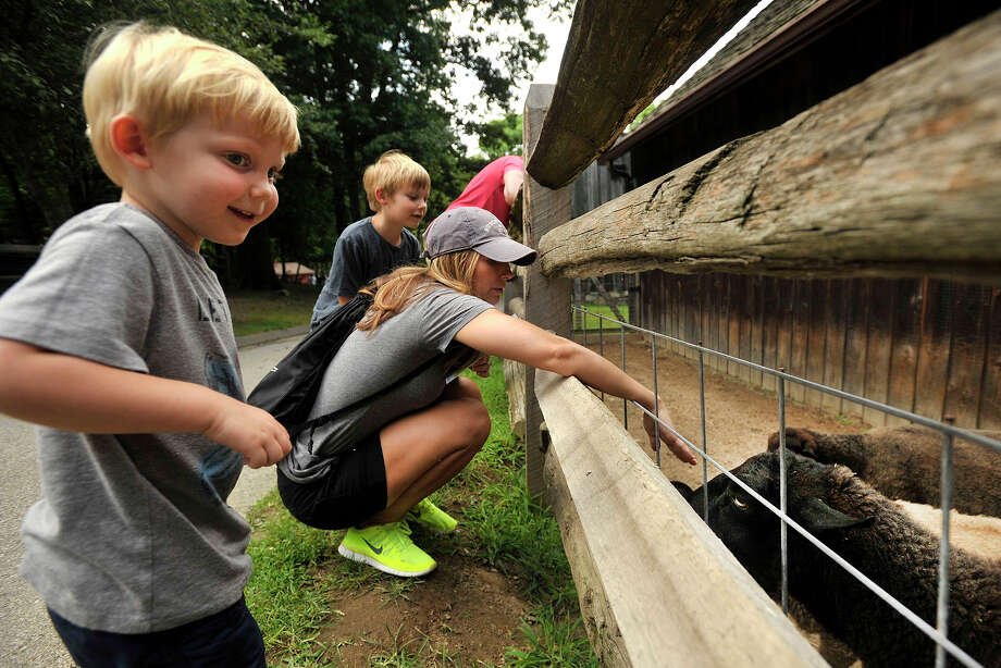 Cade Cuppernell, left, and his brother Collen, second from left, look at Jacob sheep with their mother Jamie, center foreground, and father Craig, standing in background, at the Stamford Museum and Nature Center in Stamford, Conn., on Sunday, Aug. 3, 2014. Photo: Jason Rearick / Stamford Advocate